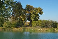 Хрест у оточенні старих дерев на березі озера
