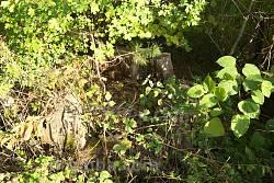 600-літній дуб, а точніше те, що від нього залишилось